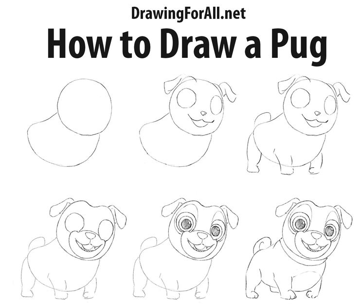 how to draw a pug pugs of the frozen north five ideas for the classroom to draw pug a how