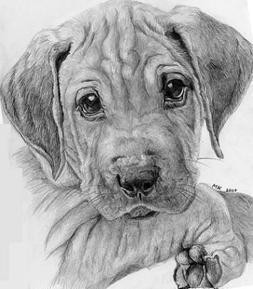 how to draw a realistic dog 1368 best images about artistic on pinterest realistic a to realistic dog draw how