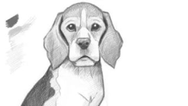 how to draw a realistic dog 30 ways to draw dogs diy projects for teens dog realistic a to draw how
