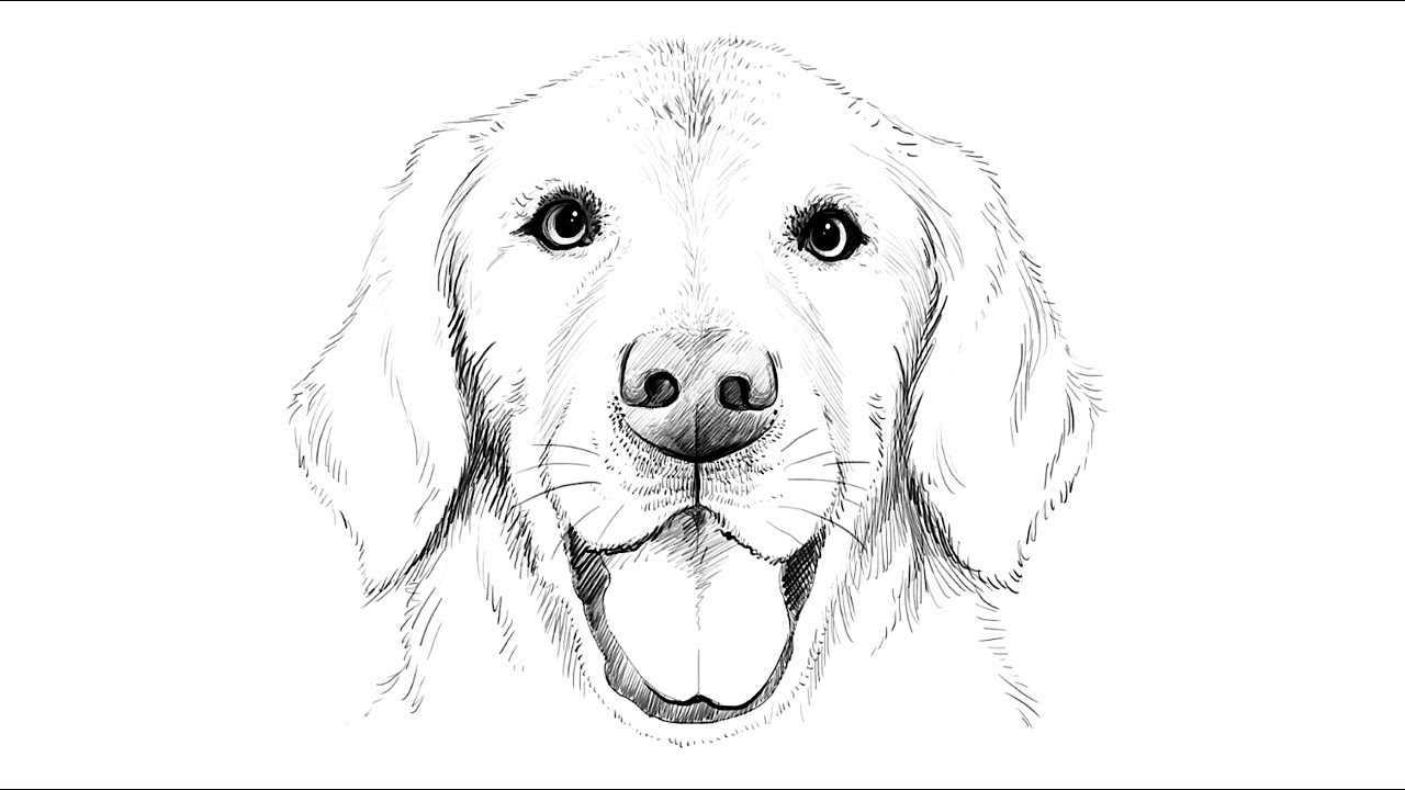 how to draw a realistic dog 88 realistic golden retriever drawing easy l2sanpiero dog a draw to realistic how