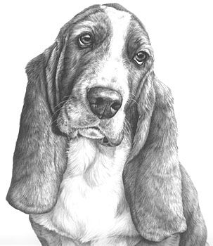 how to draw a realistic dog bassett hound drawing dog drawing realistic animal to realistic draw dog how a