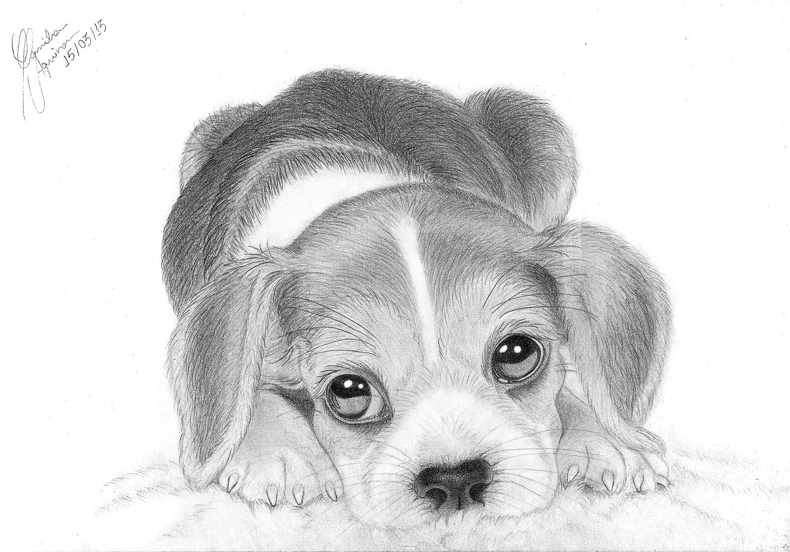 how to draw a realistic dog beagle puppy by triskl3 on deviantart how draw a realistic to dog