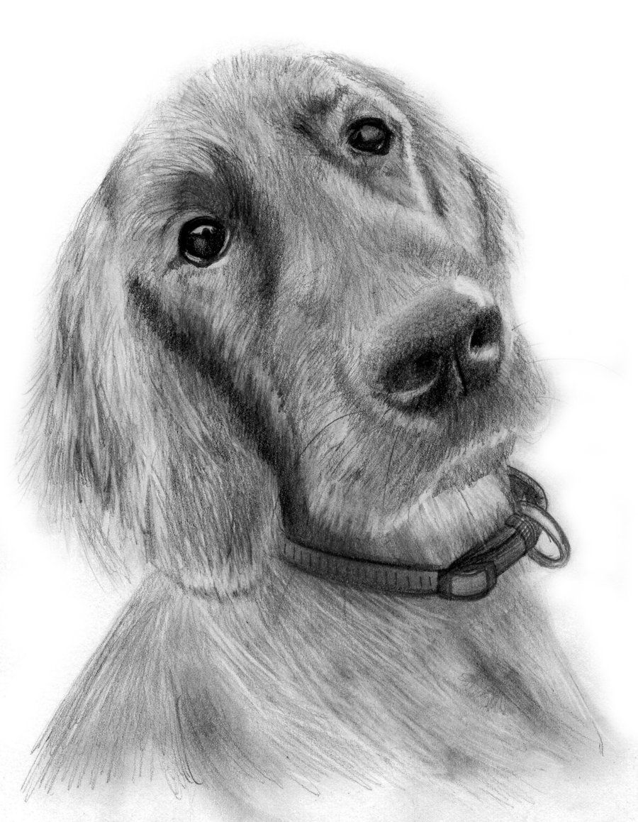how to draw a realistic dog dog drawing in pencil realistic pencil drawings how realistic a dog to draw