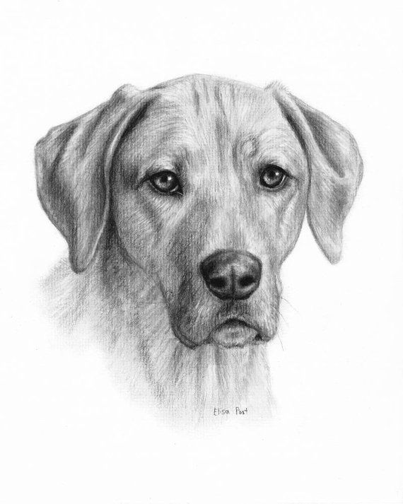 how to draw a realistic dog dog portrait drawing dog drawing custom custom pet draw realistic a how to dog