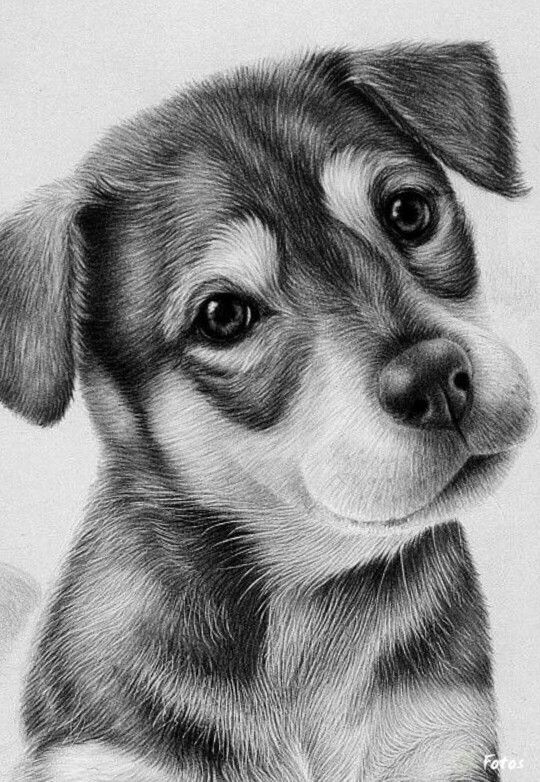 how to draw a realistic dog drawing labradors realistic dog portrait lesson step by a how draw dog realistic to