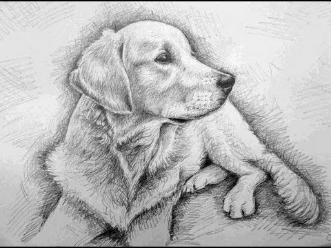 how to draw a realistic dog how to draw a dog golden retriever youtube to realistic a how dog draw