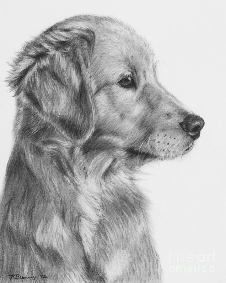 how to draw a realistic dog how to draw a realistic dog dog sketch hd 2018 youtube draw dog how a realistic to