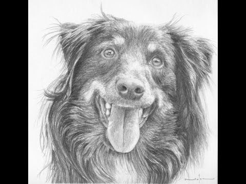 how to draw a realistic dog how to draw a realistic dog youtube realistic draw to a dog how