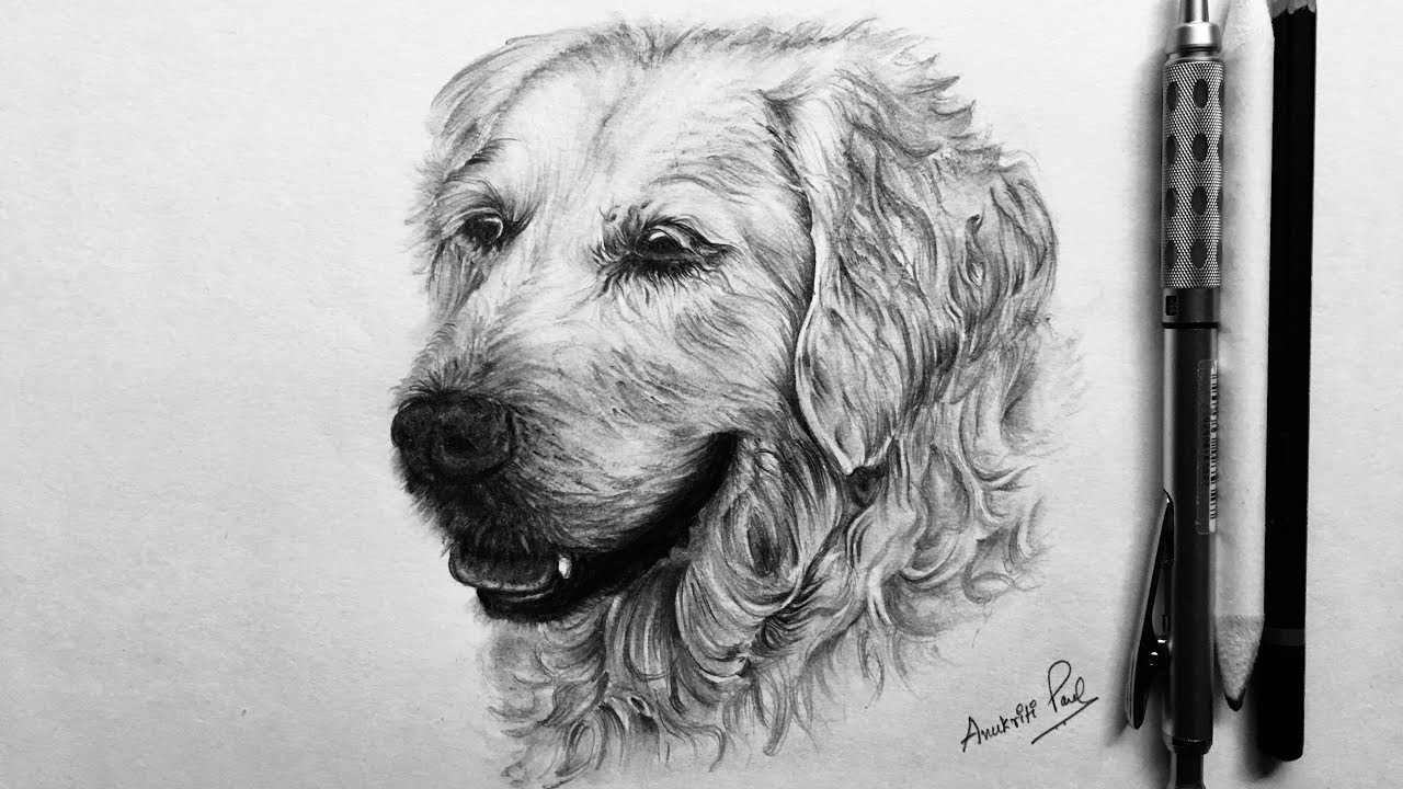 how to draw a realistic dog how to draw realistic dog google search hond kunst dog to a how draw realistic