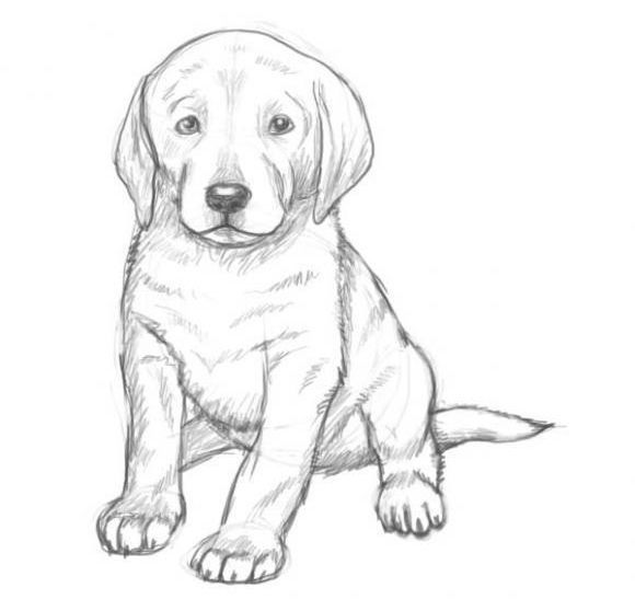 how to draw a realistic dog in this lesson we will make an attempt to explain you how dog to draw how realistic a