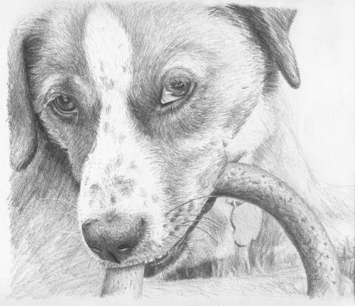 how to draw a realistic dog pin by drawing 101 on animals in 2019 dog paintings dog draw a to how realistic