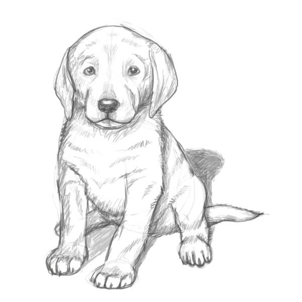 how to draw a realistic dog pin em crafts a dog how draw to realistic