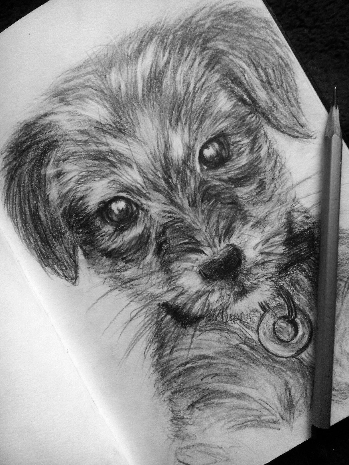 how to draw a realistic dog puppy drawing pencil cute dog pencil drawing of a dog how realistic a draw to