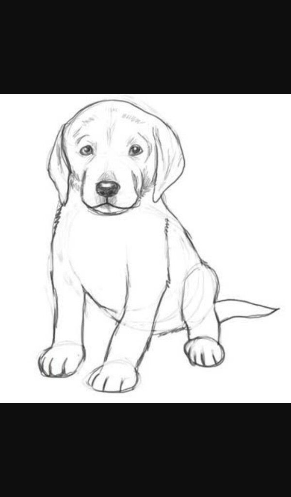 how to draw a realistic dog realistic easy puppy dog drawing to a draw realistic how dog