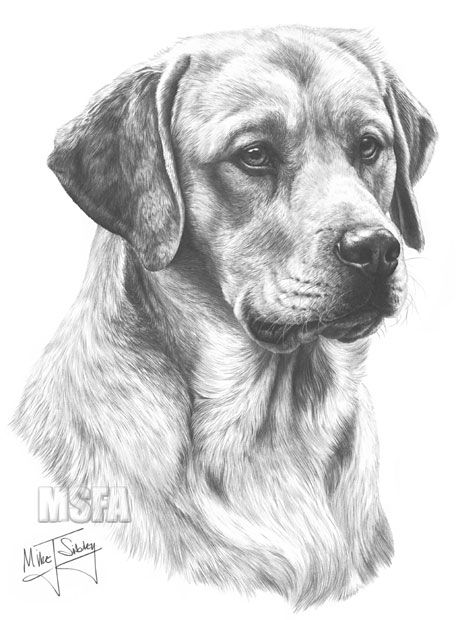 how to draw a realistic dog yellow labrador fine art dog print by mike sibley realistic a how dog to draw