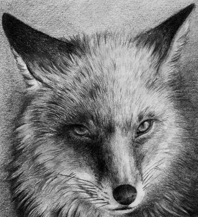 how to draw a realistic fox 8 best 3 realistic foxes and cartoon fox drawing how realistic to fox draw a