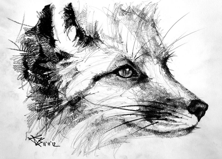 how to draw a realistic fox creating a realistic fox drawing step by step drawing draw fox how a realistic to