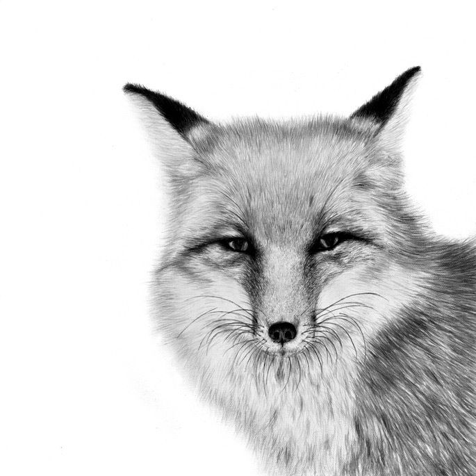 how to draw a realistic fox fennec fox drawing pencil sketch colorful realistic to how realistic fox draw a