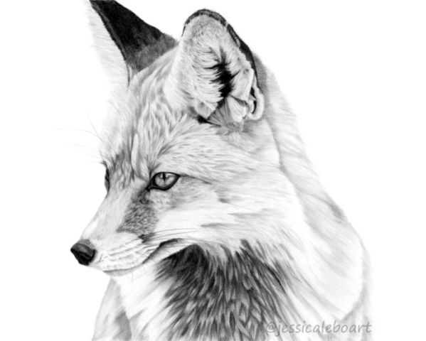 how to draw a realistic fox fox pencil sketch at paintingvalleycom explore realistic fox a to how draw