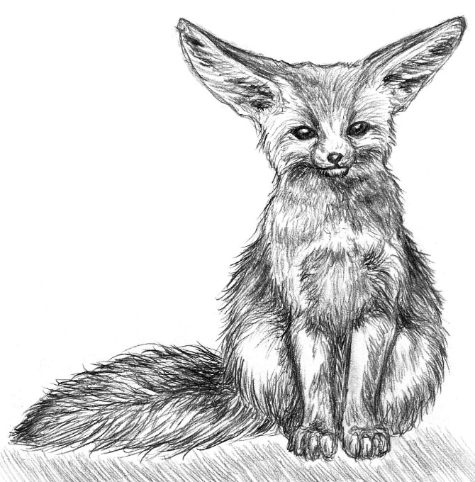 how to draw a realistic fox how to draw a realistic fox draw fox to realistic how a
