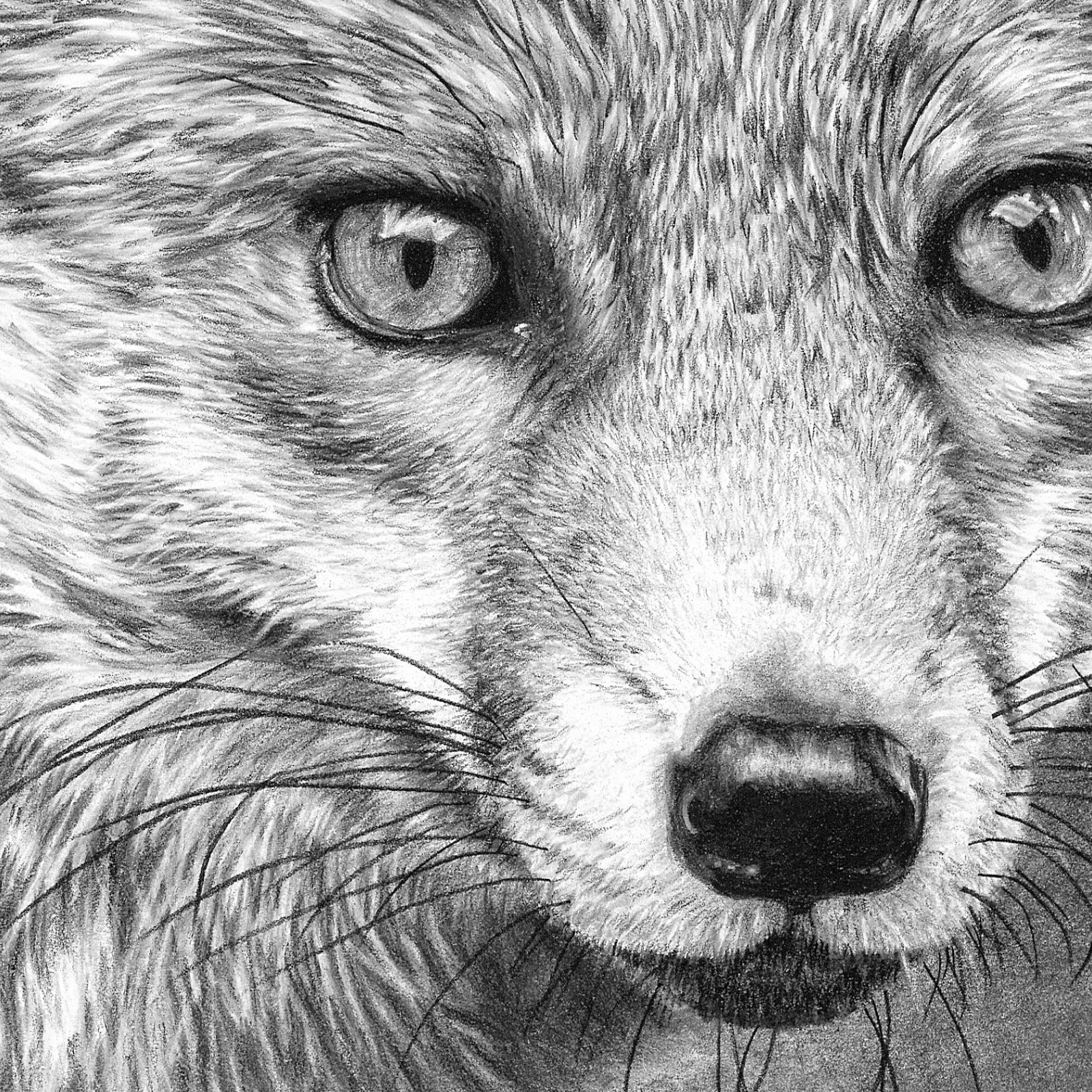 how to draw a realistic fox httpswwwtumblrcomdashboard fox drawing sketches how a to fox draw realistic