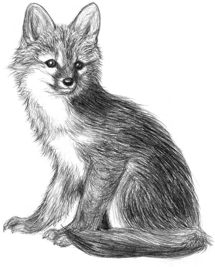 how to draw a realistic fox kids learn how to draw a fox crafts creativity a draw fox how to realistic