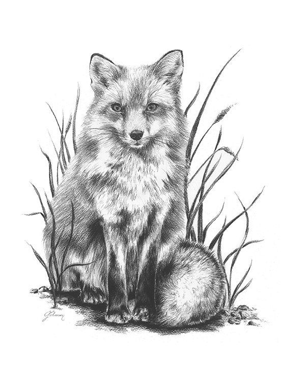 how to draw a realistic fox realistic fox drawing in 4 steps with photoshop how fox a realistic to draw