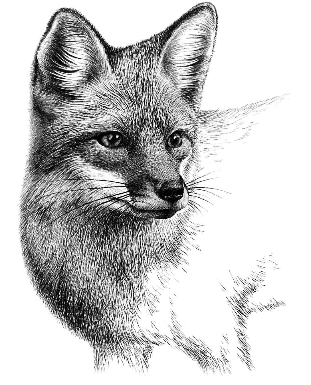 how to draw a realistic fox realistic fox drawing in 4 steps with photoshop in 2020 draw realistic to how fox a