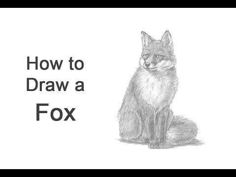 how to draw a realistic fox red fox by chris mosley fox sketch fox drawing a realistic fox how draw to