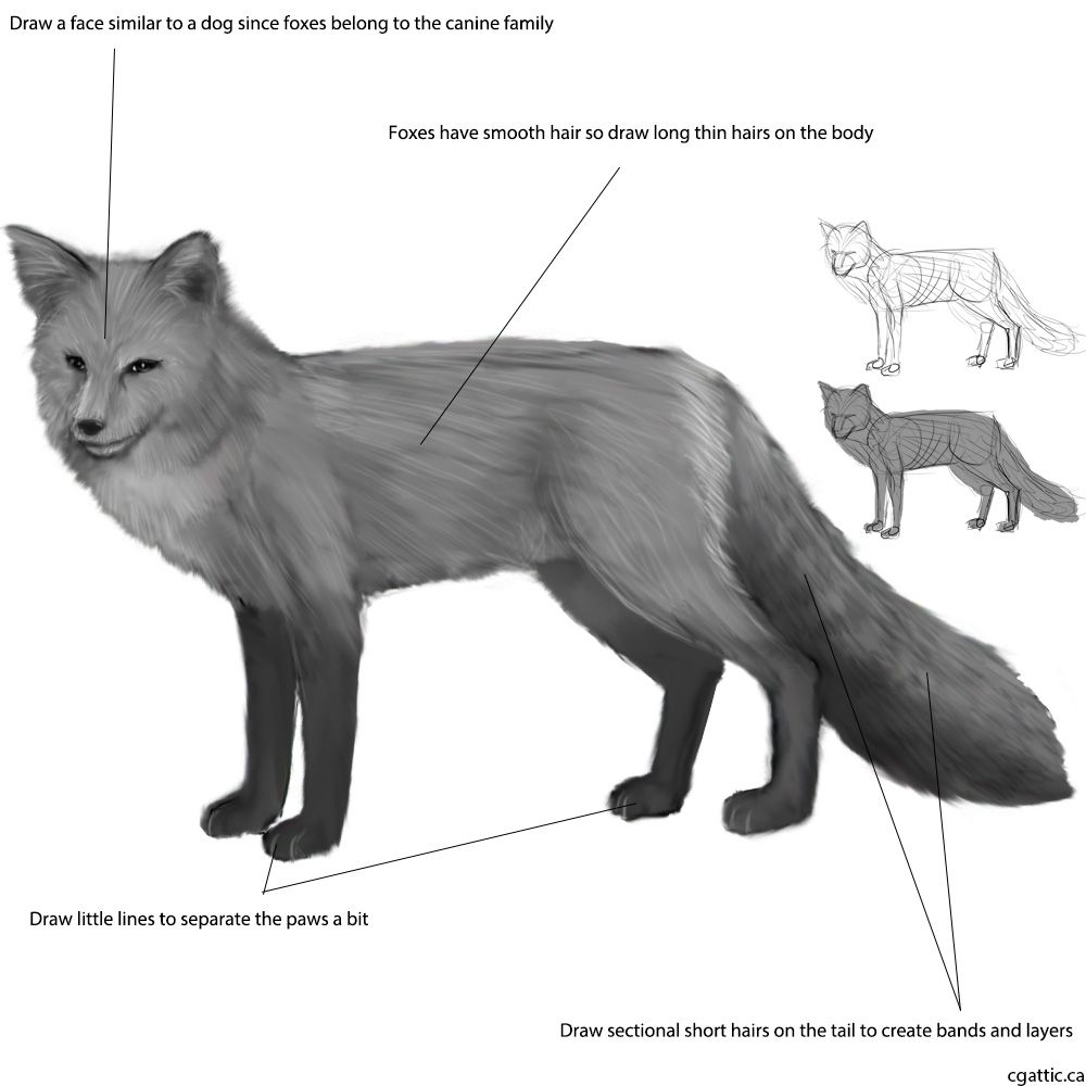 how to draw a realistic fox visit httpwwwhow2drawanimalscom or my channel for draw how fox a to realistic