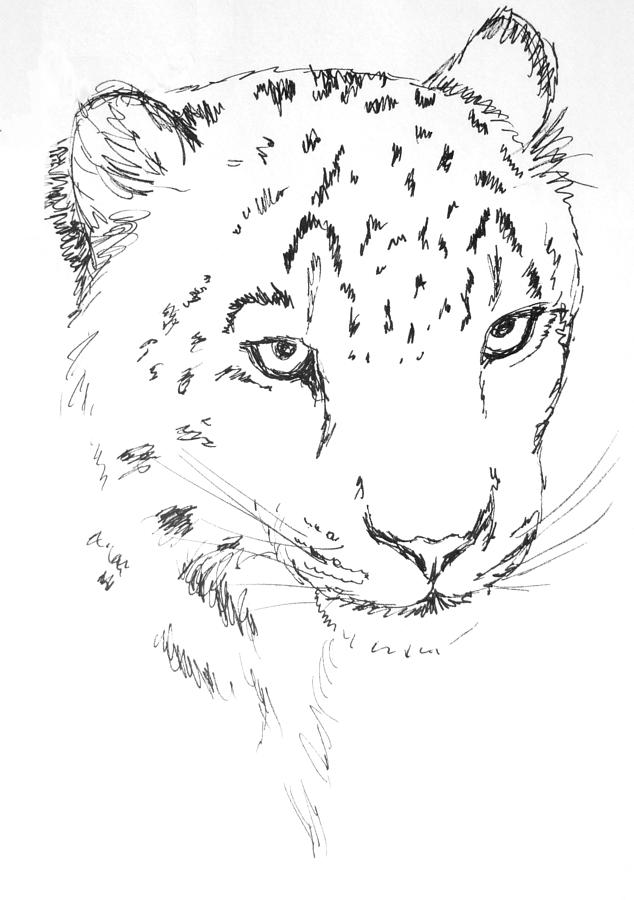 how to draw a snow leopard face amazing drawing on the new ipad snow leopard youtube snow to how draw leopard a face
