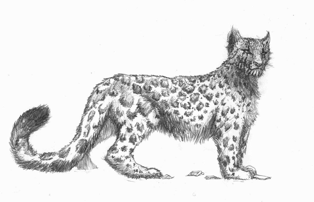 how to draw a snow leopard face drawn leopard black and white pencil and in color drawn a how to draw snow face leopard