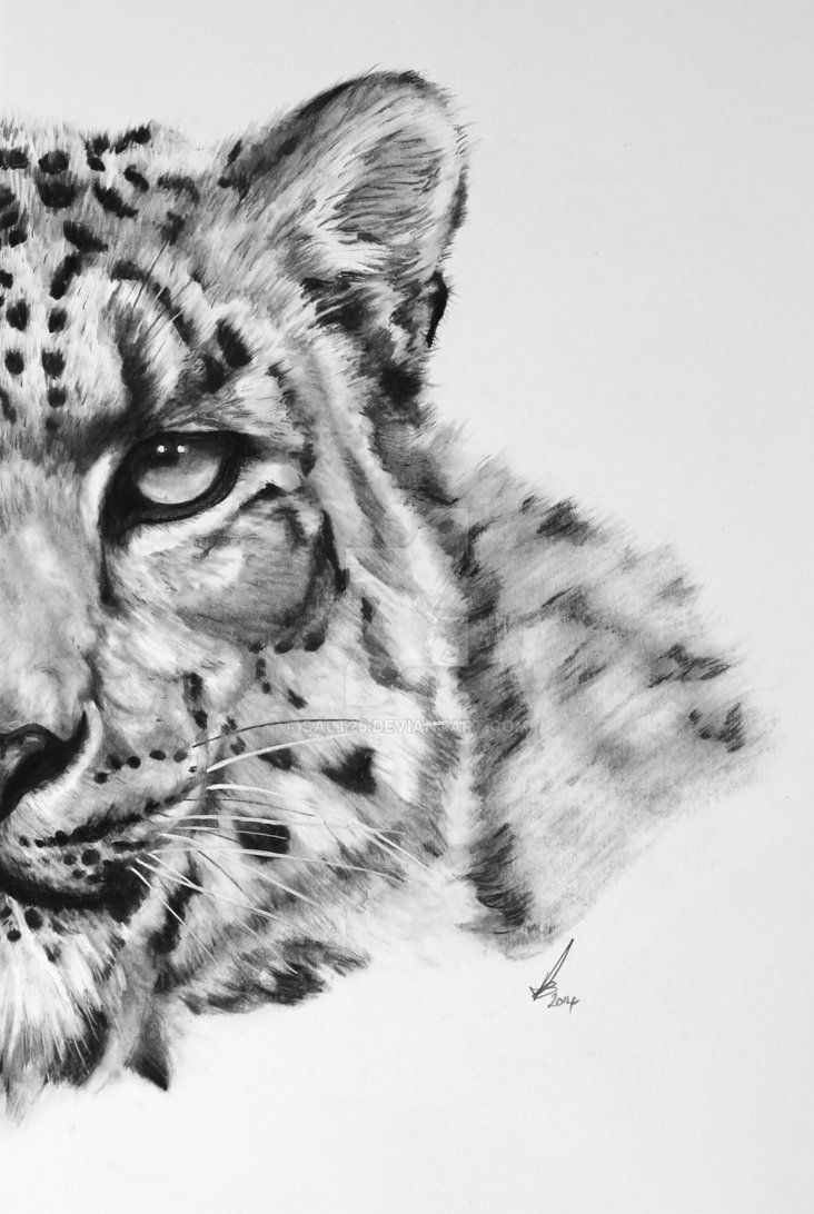 how to draw a snow leopard face google image result for httpwwwdeviantartcomdownload leopard face snow to a draw how