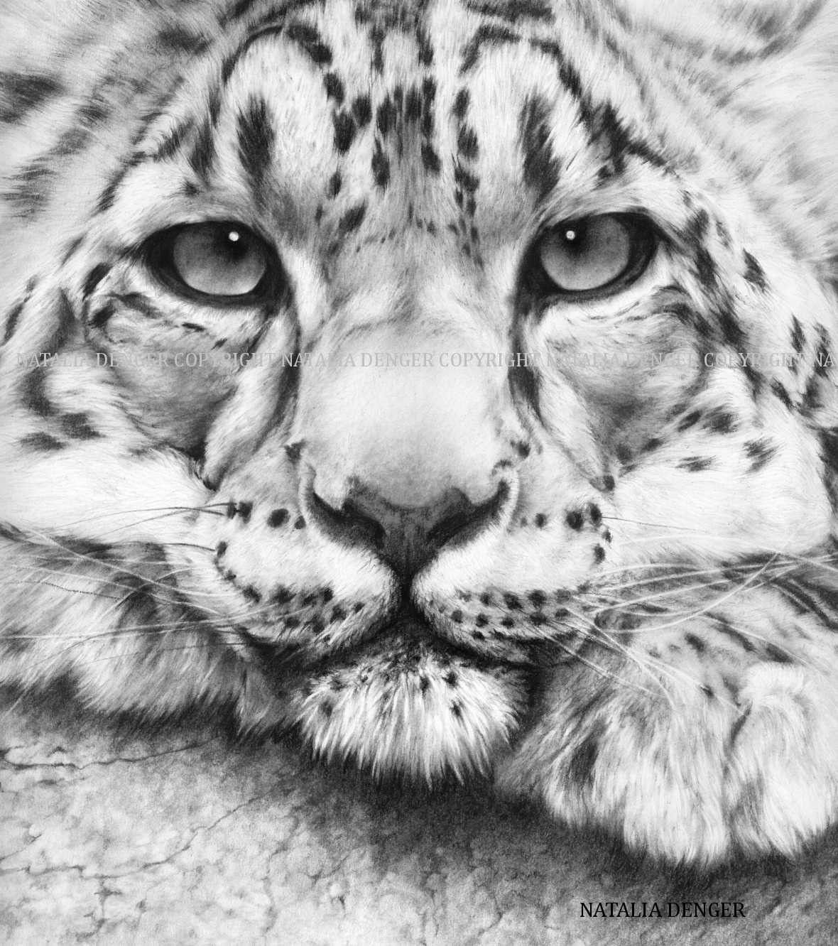 how to draw a snow leopard face half series snow leopard by salt25 snow leopard art how snow draw face to leopard a