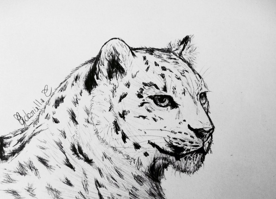 how to draw a snow leopard face how to draw a leopard face sketch in 2020draw face how to a snow leopard draw face