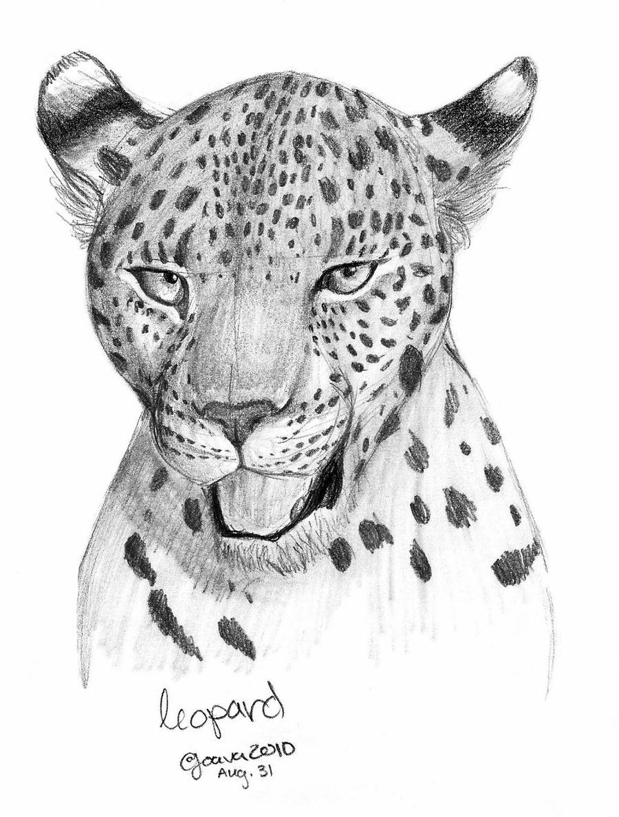 how to draw a snow leopard face jaguar face clipart 20 free cliparts download images on draw snow leopard face to a how