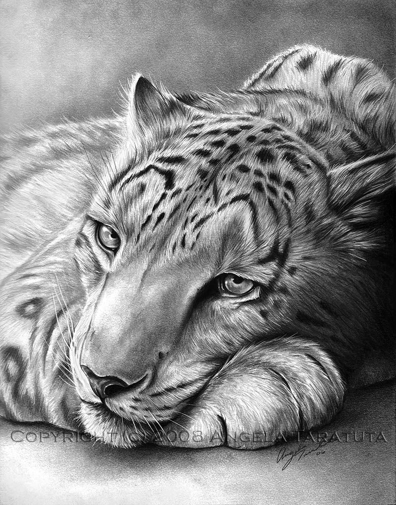 how to draw a snow leopard face learn how to draw a snow leopard antarctic animals step leopard a draw to snow how face