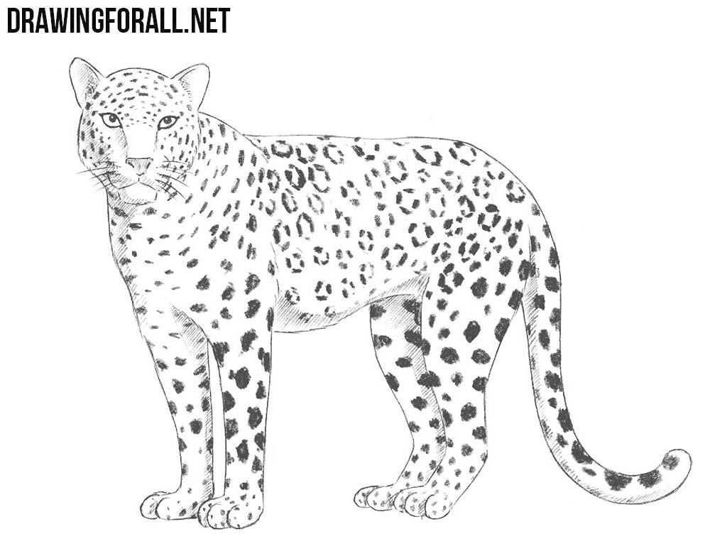how to draw a snow leopard face leopard cartoon drawing at getdrawings free download leopard snow to how draw a face