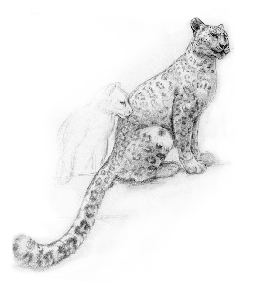 how to draw a snow leopard face leopard face by joava on deviantart leopard draw snow face how a to