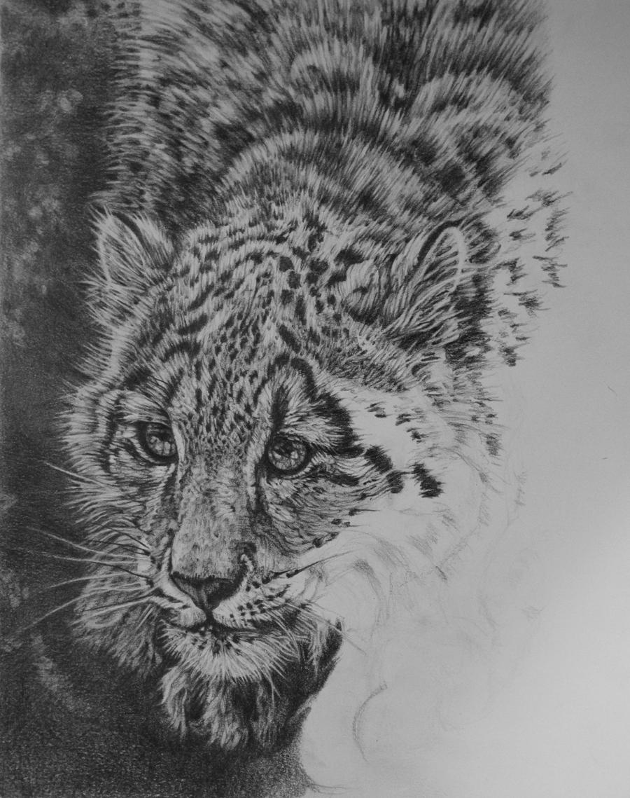 how to draw a snow leopard face original aceo snow leopard right eye pencil drawing snow leopard a face draw how snow to