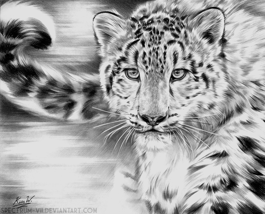 how to draw a snow leopard face snow leopard by bob patterson face snow leopard to how draw a