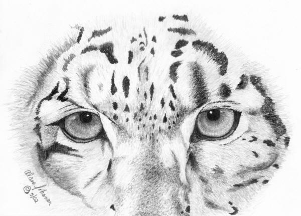 how to draw a snow leopard face snow leopard by natalia denger with images realistic to snow leopard a draw face how