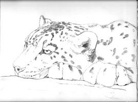 how to draw a snow leopard face snow leopard coloring page from snow leopards category to a how leopard snow draw face