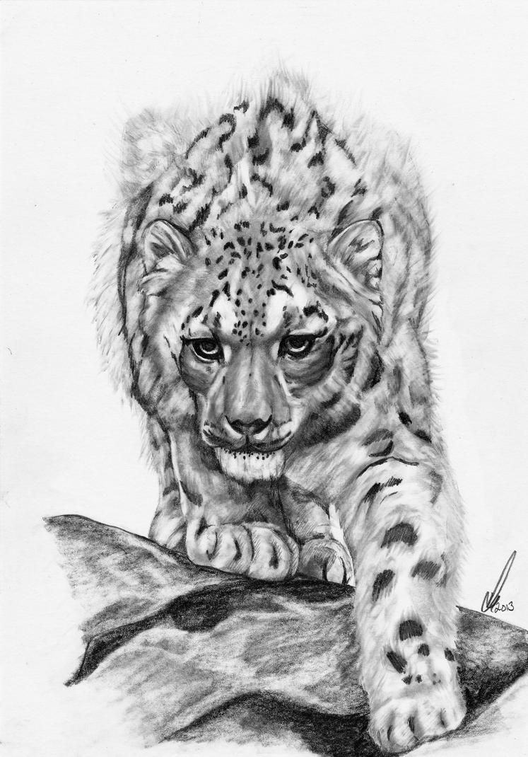 how to draw a snow leopard face snow leopard in graphite snow leopard snow leopard how face to snow draw a leopard