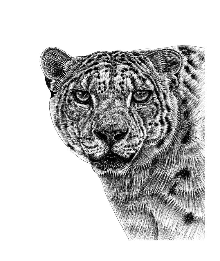 how to draw a snow leopard face snow leopard pencil portrait pencil drawings pencil to a how snow face draw leopard
