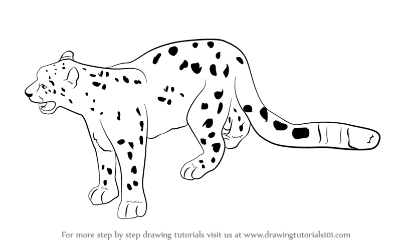 how to draw a snow leopard face snow leopard pencil sketch with images leopard sketch face to how a leopard snow draw