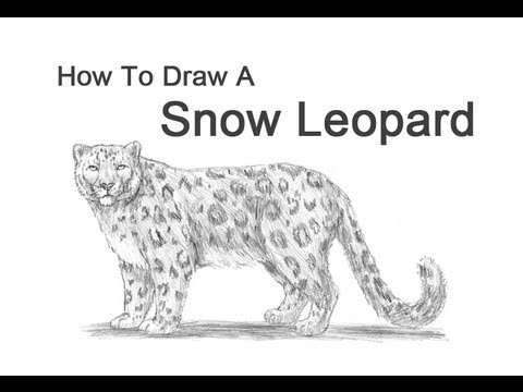 how to draw a snow leopard face snow leopard portrait drawing by loren dowding leopard how draw face to snow a
