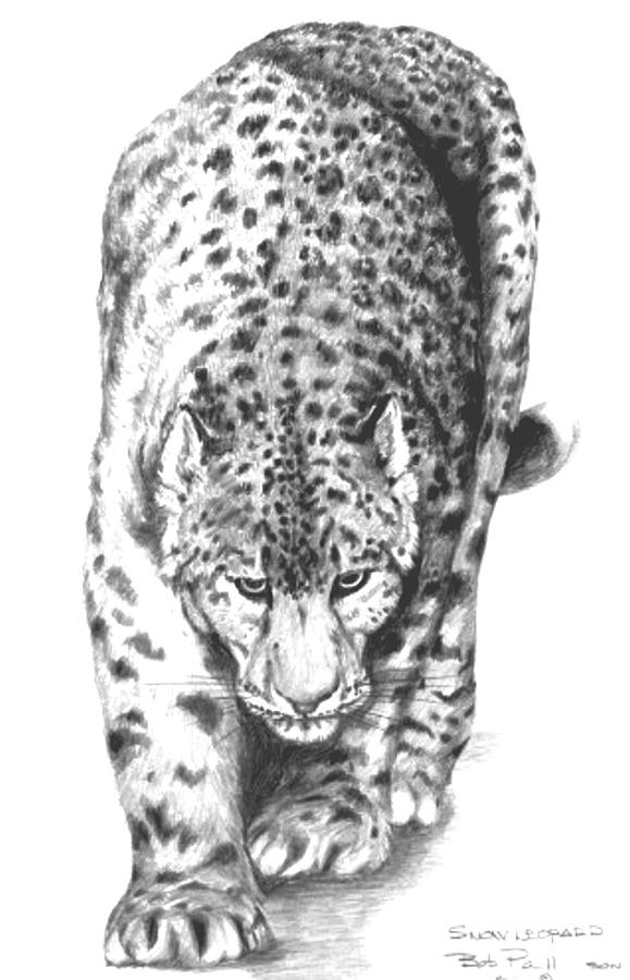 how to draw a snow leopard face snow leopard sketch drawing to how draw a face snow leopard