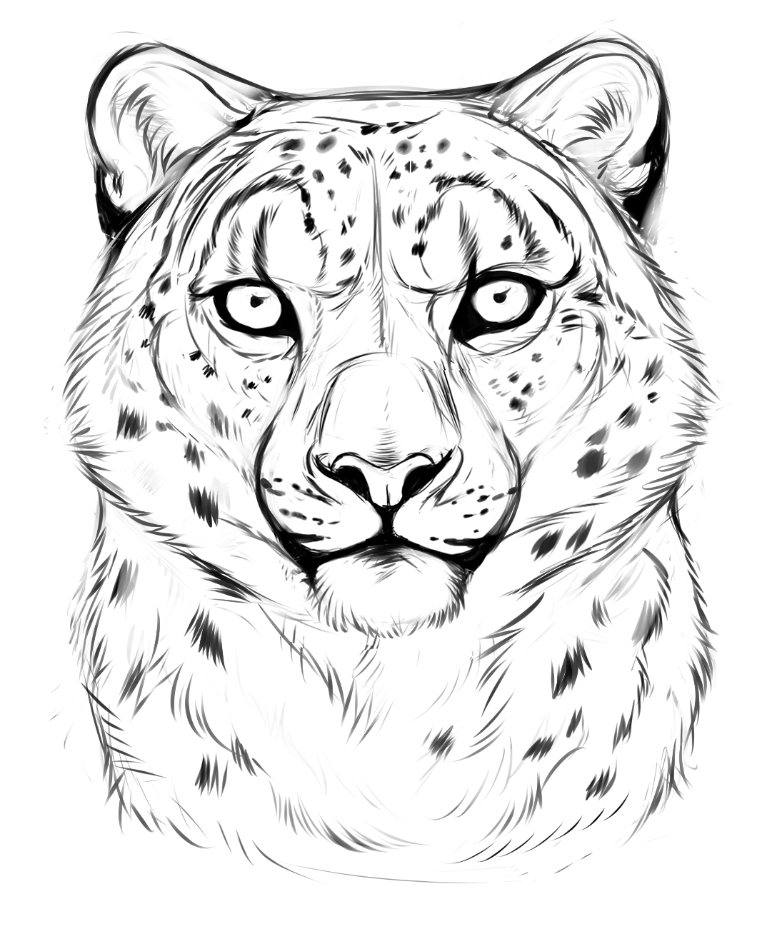 how to draw a snow leopard face snow leopard sketch portrait by sschukinadeviantartcom to a draw snow leopard face how