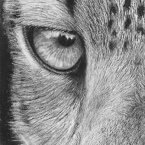 how to draw a snow leopard face snow leopard snarl reworked by dhekaliadeviantartcom snow a to face how leopard draw